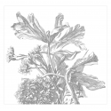 Engraved Flowers, 6 sheets WP-671